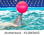 Dolphin And A Red Ball On Nose. ...