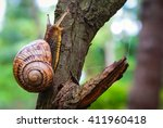 Snail On The Tree In The Garden....