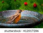 Young Robin Bird  Turdus...