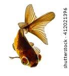 telescope eye goldfish isolated ... | Shutterstock . vector #412021396
