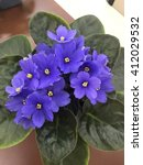 Small photo of African violet in the office table
