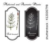 field horsetail  equisetum... | Shutterstock .eps vector #412030798