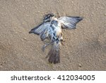 Dead Seabird Decomposed To...