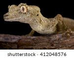 Small photo of Gunther's leaf-tailed gecko (Uroplatus guentheri)