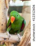 Green Parakeet Parrot Bird.