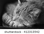 Stock photo close up of peaceful cat curled up sleeping home in his bed black and white photography 412313542
