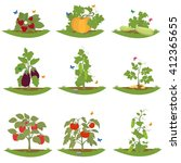 bush fruit bearing plants.... | Shutterstock .eps vector #412365655