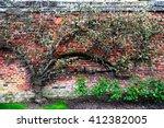 Climbing Plants On The Brick...