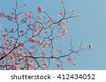 Leafless Tree Branch With Pink...