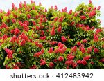 Red Horse Chestnut Tree With...