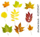 collection of yellow leaves on... | Shutterstock . vector #41253547