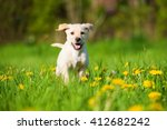 Stock photo labrador puppy 412682242