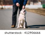 young funny white and gray...   Shutterstock . vector #412906666