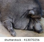 Small photo of Sweet dreams / The boars were fed on young people inured. I could eat,sleep it was a sweet dream