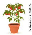 tomato plant in pot isolated on ... | Shutterstock .eps vector #413082166