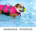 A Bulldog In A Pink Polka Dot...