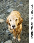 golden retriever dog | Shutterstock . vector #413182066