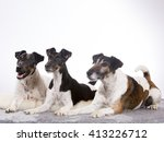 A Group Of Smooth Fox Terriers...