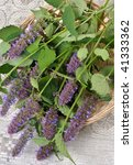 Small photo of A bunch of stems with flowers of aromatic and medicinal plants Korean Mint (Agastache rugosa).