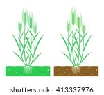 Young Wheat Plant With Leaves...