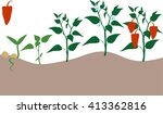 pepper growing stage | Shutterstock .eps vector #413362816
