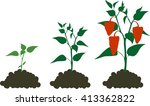 pepper growing stage | Shutterstock .eps vector #413362822