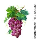 grape with leaves on a branch.... | Shutterstock . vector #413423032
