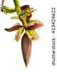 Banana Blossom Banana Flower...