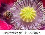 Macro Shot Of Honey Bee Inside...