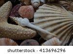 shells 2   Shutterstock . vector #413696296