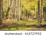 several animals on pasture eat... | Shutterstock . vector #413727952