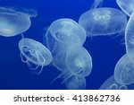 Moon Jellyfish Drifting Softly...