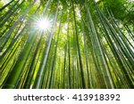Bamboo Forest  With Sun Flare ...