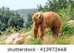 eurasian brown bear  ursus...   Shutterstock . vector #413972668