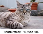 Stock photo cute cat with confident look 414055786