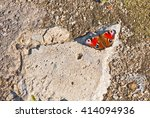 the bright butterfly sits on a... | Shutterstock . vector #414094936