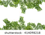 green leaf isolated on white... | Shutterstock . vector #414098218