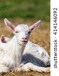 goatling | Shutterstock . vector #414146092