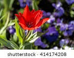 close up of beautiful red tulip ... | Shutterstock . vector #414174208