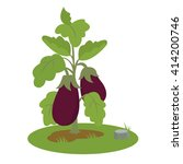eggplant bush with fruits.... | Shutterstock .eps vector #414200746