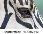 Close Up Of The Eye Of A Zebra...