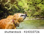 happy golden retriever  | Shutterstock . vector #414310726