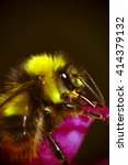 Close Up Of A Bee Pollinating...