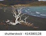 Dead Tree On A Beach Of Lago...