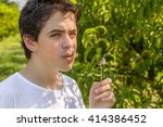 teenager next to rows of apple... | Shutterstock . vector #414386452