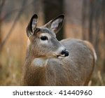 White Tailed Deer In The Forest ...