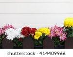 Different Decorative Flowers  ...