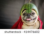 Stock photo pug wearing a watermelon helmet the pugs hero 414476602