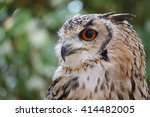 Stock photo rock eagle owl bubo bengalensis 414482005