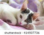 Stock photo cute cat 414507736